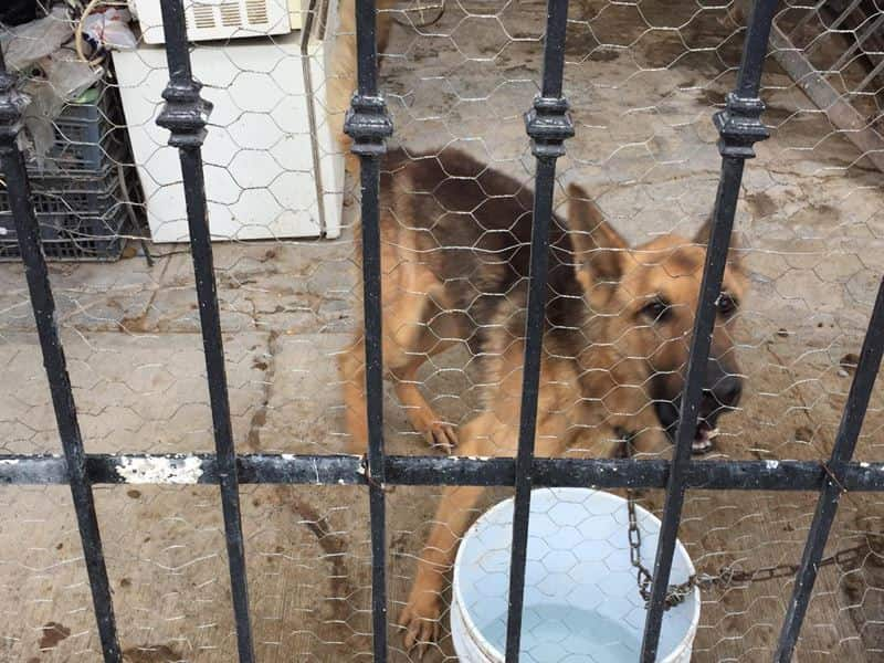 Dos perros fueron asegurados ante las denuncias por crueldad contra animales