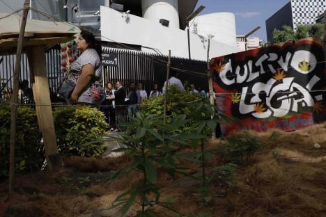 Aplazan otra vez dictamen sobre regulación de cannabis