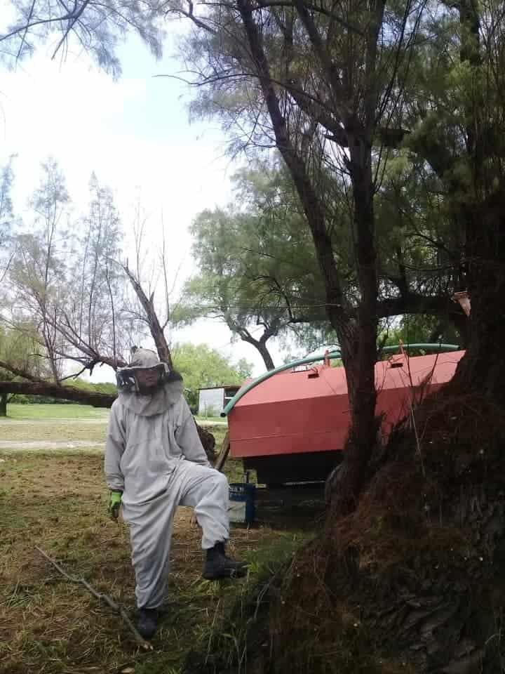 Terminaron con diversas lesiones al ser atacados por un enjambre de abejas