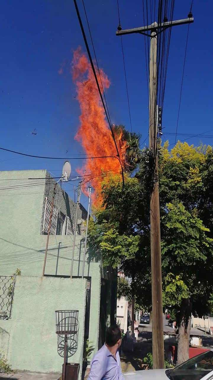 El incendio de dos palmeras movilizó a elementos de Bomberos y Protección Civil