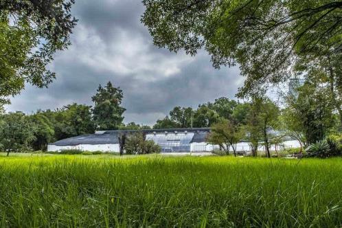 IP pagaría a Renzo Piano honorarios por pabellón