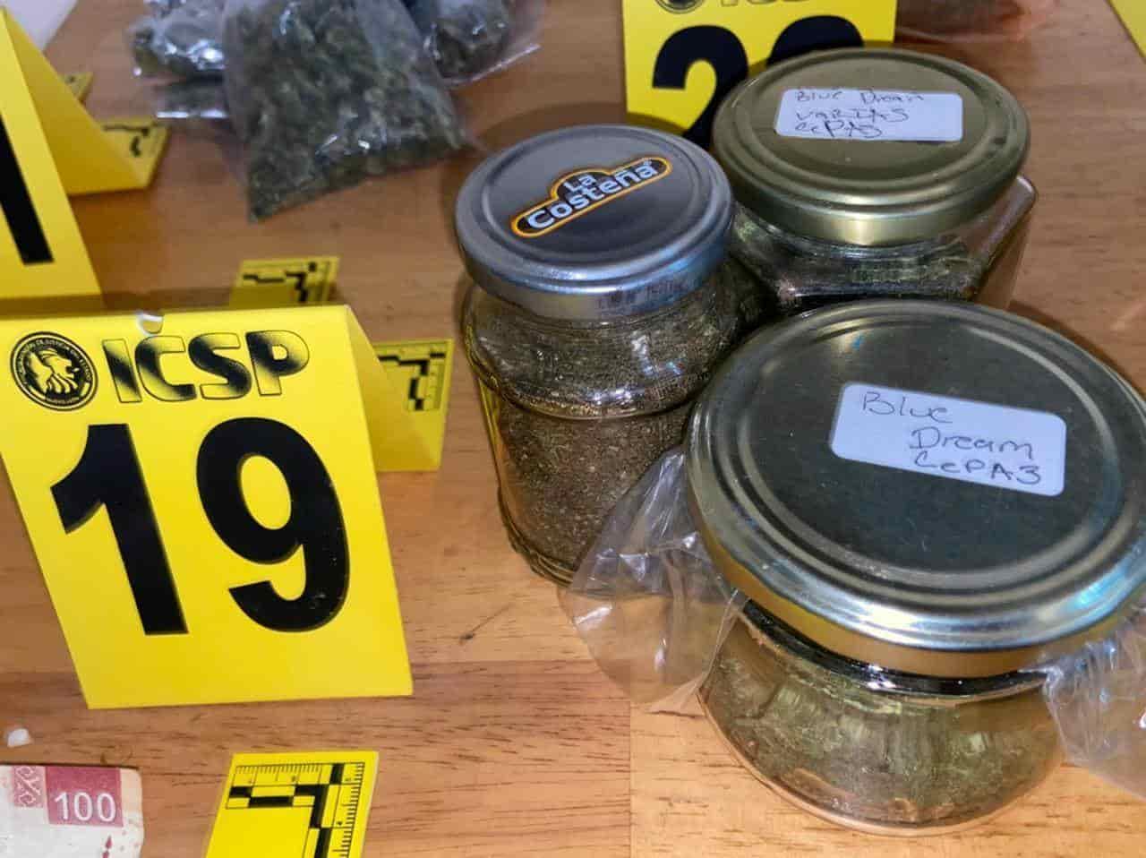 Un plantío de marihuana en macetas, fue asegurado por la AEI tras un cateo