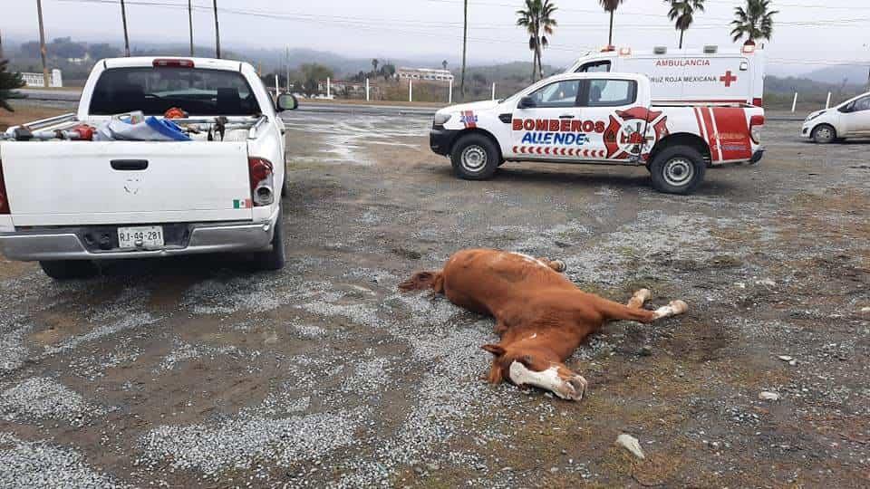 El conductor terminó con diversas lesiones, después de atropellar y matar a un equino