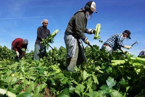 Pide México a EU cumplir leyes laborales en sector agrícola