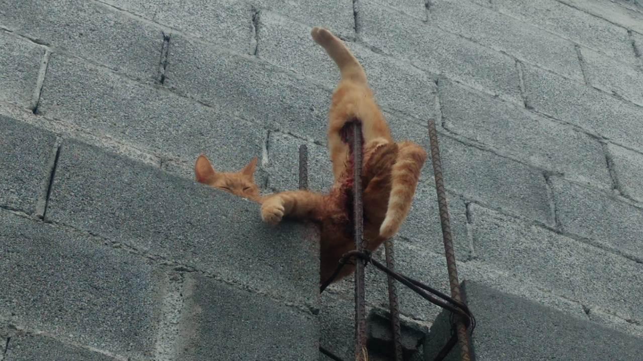 Un gato que se encajó una varilla y ya no pudo moverse, fue rescatado ayer por elementos de Protección Civil