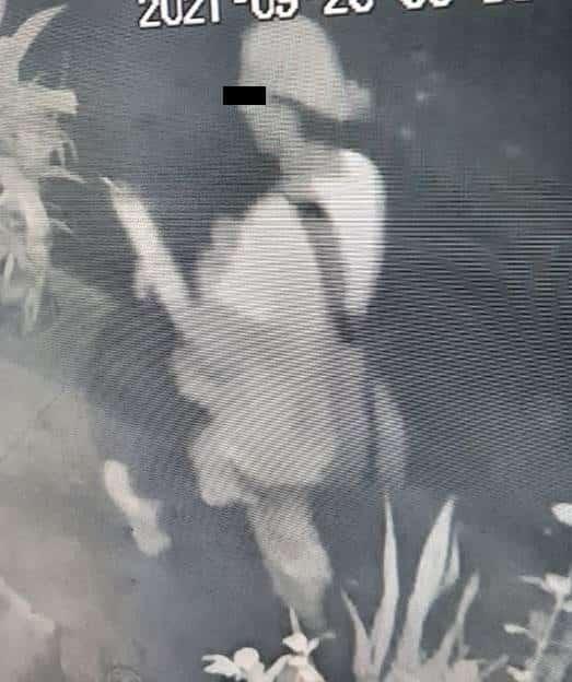Lo reconocieron como el presunto responsable de un robo a un vehículo estacionado